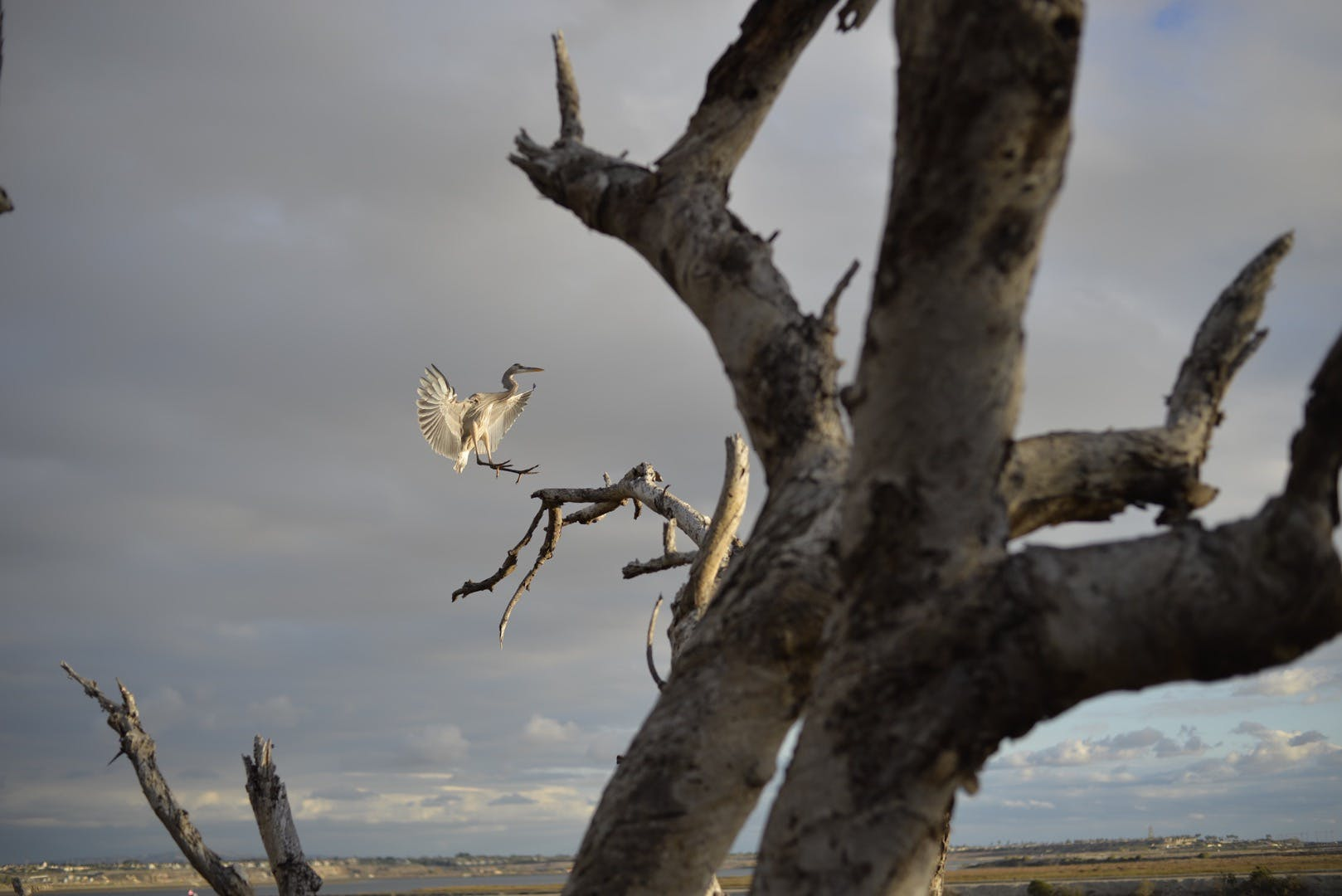 White Bird Near the Tree