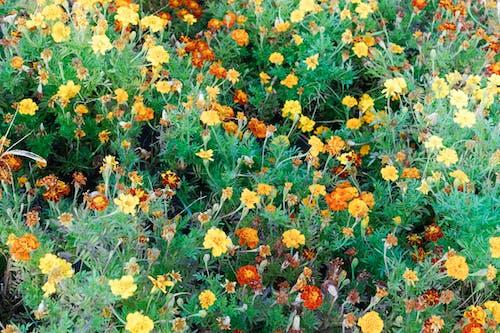 Darmowe zdjęcie z galerii z kolory, kwiaty, liście, ogród