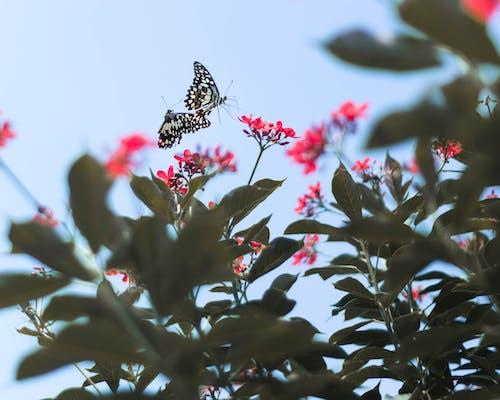 Photos gratuites de fleurs, magnifiques fleurs, papillon, papillons
