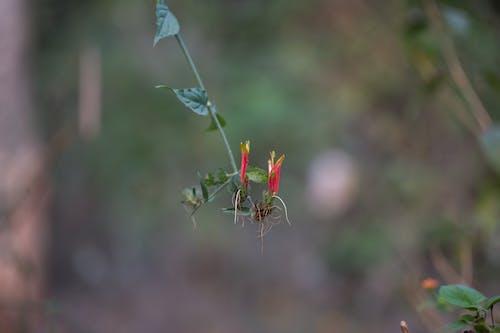 Immagine gratuita di bel fiore, rosso, sfondo artistico