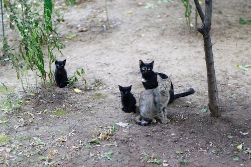 Darmowe zdjęcie z galerii z czarny, drzewa, koci, kocięta