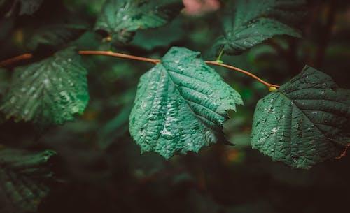 คลังภาพถ่ายฟรี ของ ความงามในธรรมชาติ, ธรรมชาติ