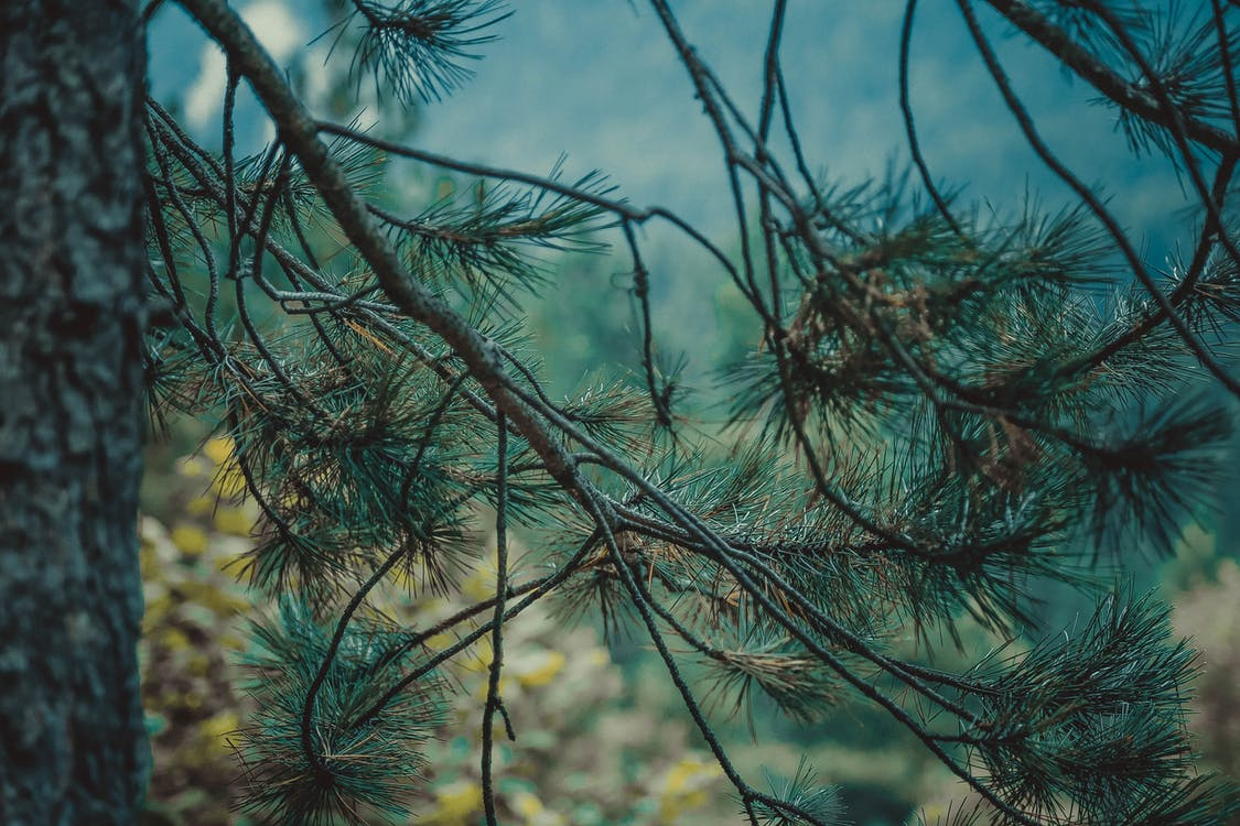 กลางแจ้ง, ก้าน, การถ่ายภาพธรรมชาติ