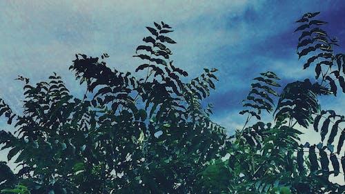 Fotos de stock gratuitas de árbol, arboles, cielo azul, hoja