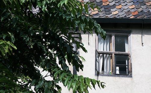 Fotos de stock gratuitas de árbol, arboles, edificio viejo, hojas