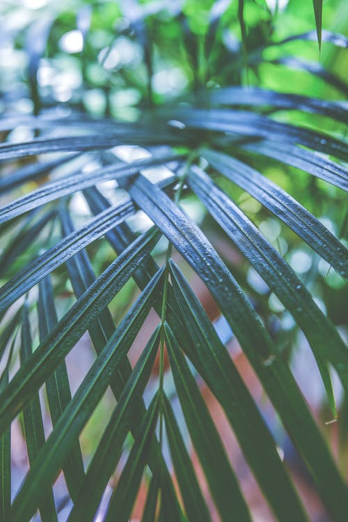 Macro Photography of Green Palm Plant