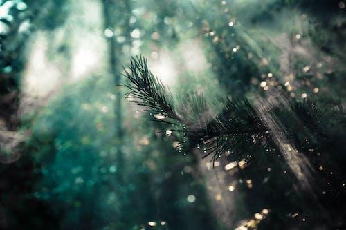 คลังภาพถ่ายฟรี ของ การถ่ายภาพ, ความงามในธรรมชาติ, ธรรมชาติ