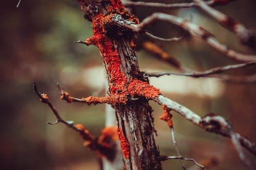 คลังภาพถ่ายฟรี ของ การถ่ายภาพธรรมชาติ, ความงามในธรรมชาติ, สวย, ไม้