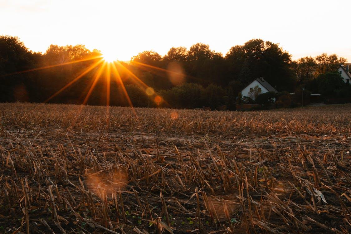 brčko, dům, farma
