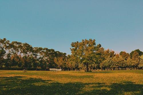 Foto d'estoc gratuïta de fotògrafs, حياة الطبيعة