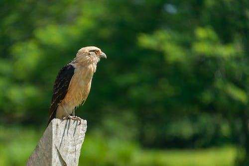 側面図, 日光, 木材, 止まった鳥の無料の写真素材