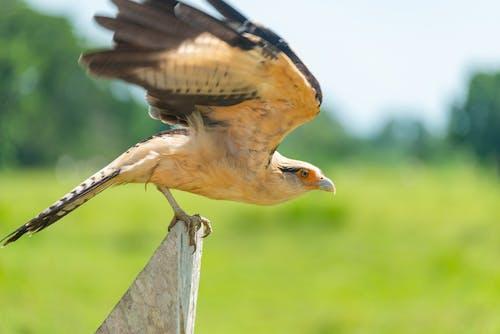 Ảnh lưu trữ miễn phí về Chim hoang dã