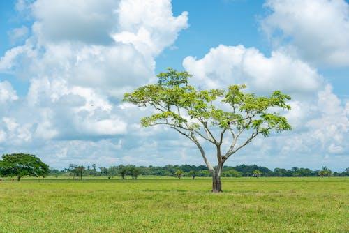 Foto profissional grátis de árvores