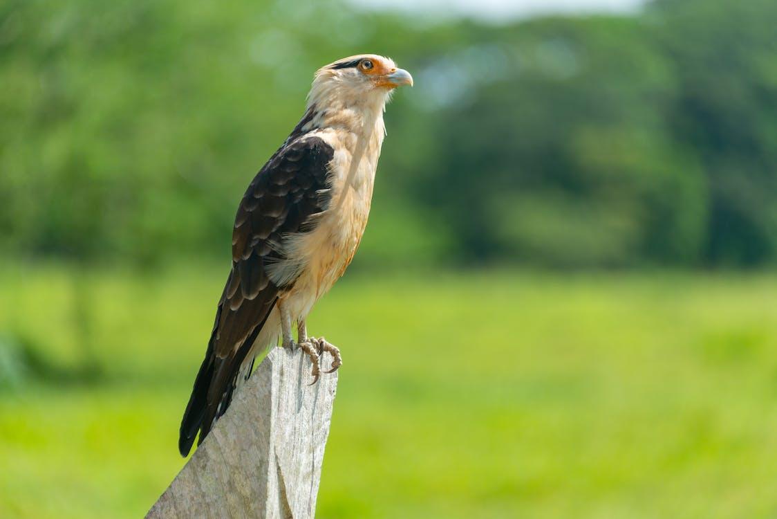 chim, chim ưng, chụp ảnh động vật