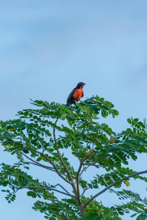 Foto profissional grátis de pássaro selvagem