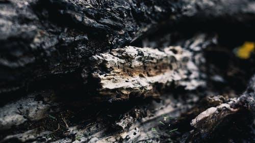 Darmowe zdjęcie z galerii z drewno, drzewo, fotografia makro, makro