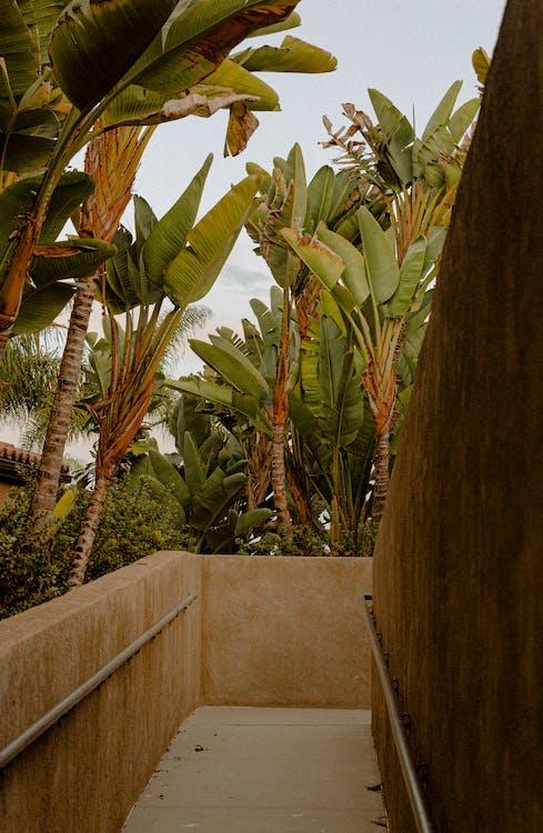 alberi, alberi di cocco, ambiente