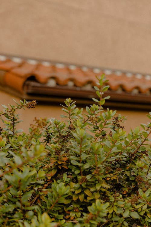 Green Plants Beside Wall