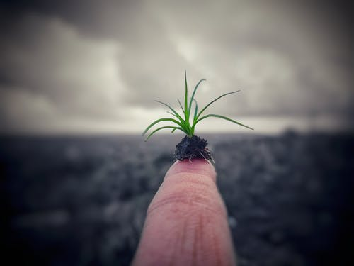 Kostenloses Stock Foto zu beginnend, geboren, grün, jungunternehmen