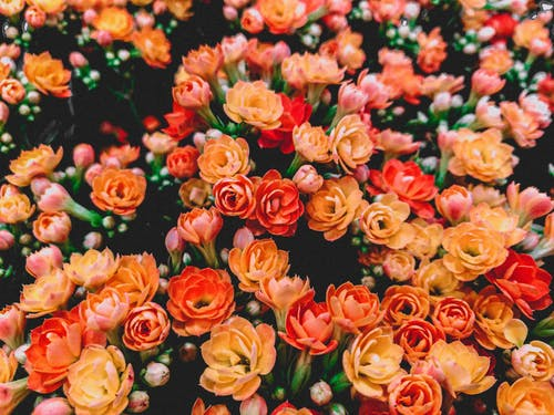 Foto stok gratis bagus, berbunga, berkembang, bunga-bunga