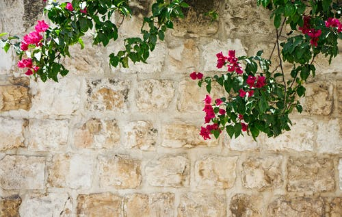 Free stock photo of background, flowers, wall