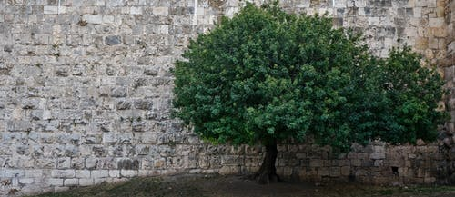 Free stock photo of background, tree, wall