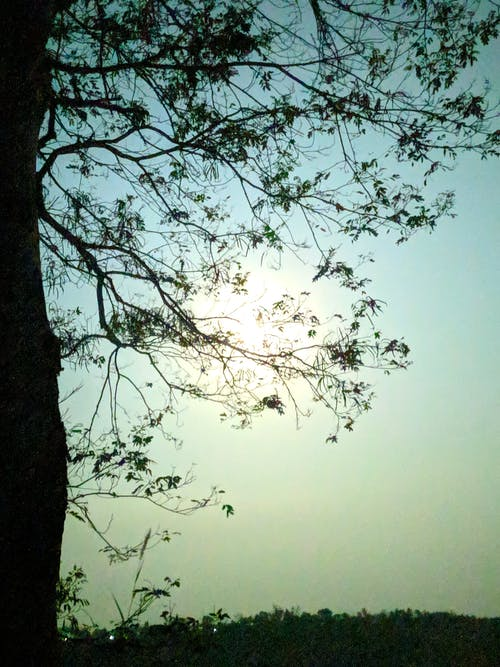 Immagine gratuita di albero, all'aperto, ambiente, colori
