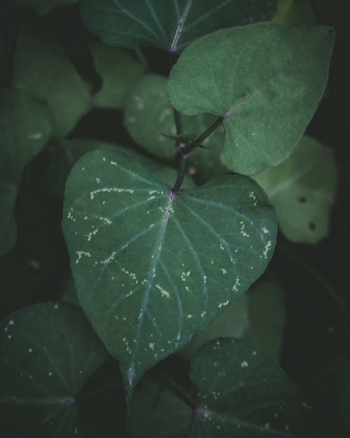 Free stock photo of beauty in nature, dark green, moody, mother nature