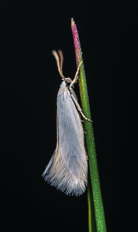 fjäril, insekt, liten