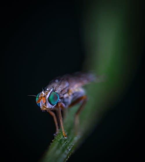 açık hava, böcek, böcekbilim, bulanık arka plan içeren Ücretsiz stok fotoğraf