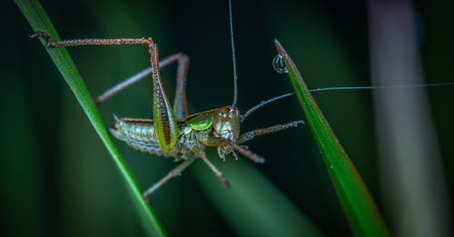 Close-up Photography Of Green Grasshopper
