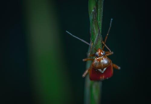 Immagine gratuita di cimice, insetto, macro
