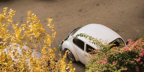 Imagine de stoc gratuită din automobil, automobil beetle, culoare, drum