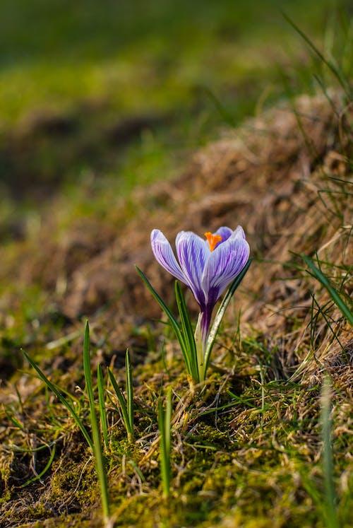 arka fon, bahar, Bahçe, baş içeren Ücretsiz stok fotoğraf