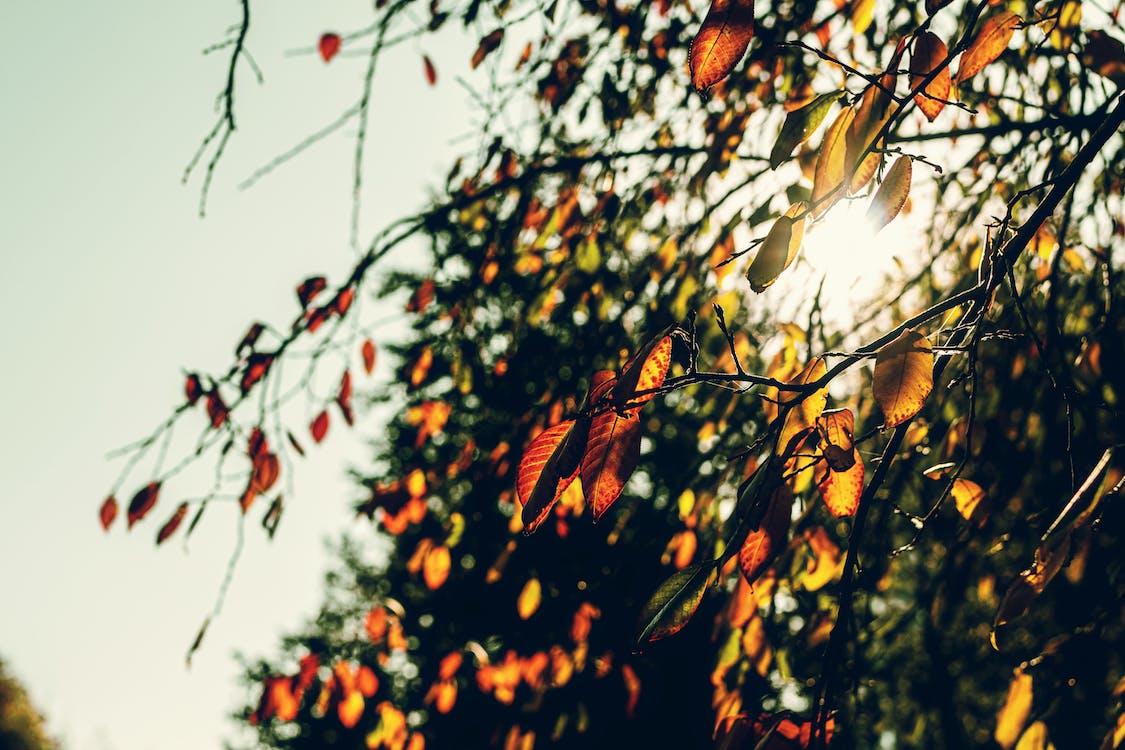 afară, anotimp, arbore