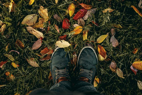 Person Wearing Black Lace-up Sneakers Standing on Green Grass With Fallen Leaves