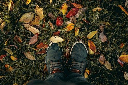 Kostnadsfri bild av bakgrund, falla, färsk, gräs