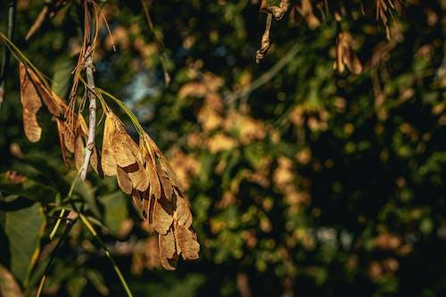 Gratis stockfoto met achtergrond, blad, bladeren, boom