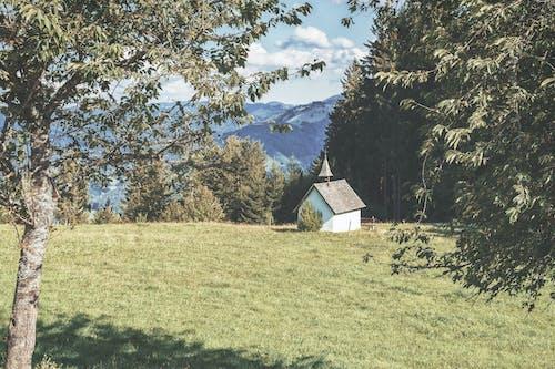 Ingyenes stockfotó erdő, fekete erdő, kápolna, rét témában