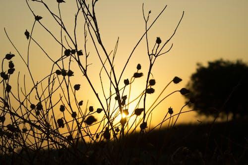 Gratis lagerfoto af kraftværker, luz, morgen lys, morgengry