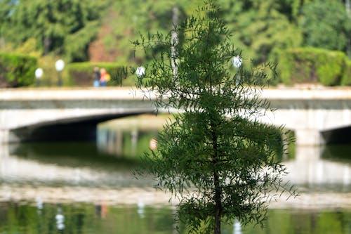 Darmowe zdjęcie z galerii z drzewo, drzewo iglaste, jezioro, ludzie