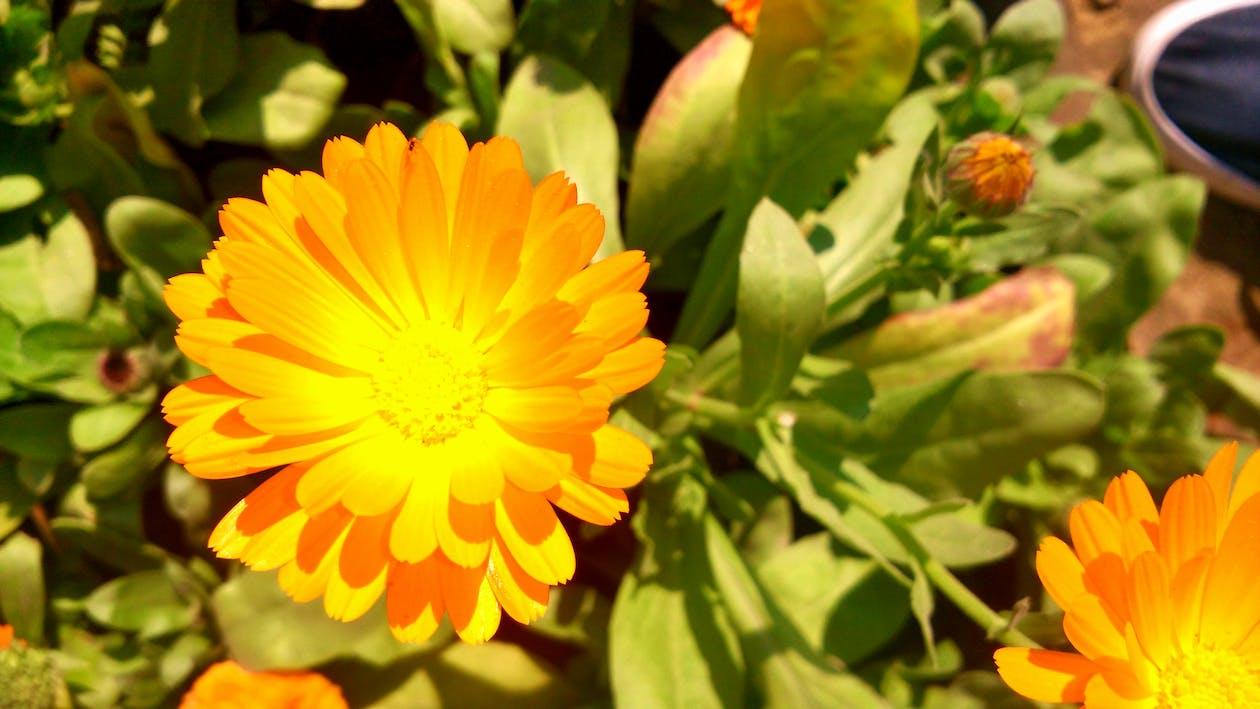 nádherné kvety