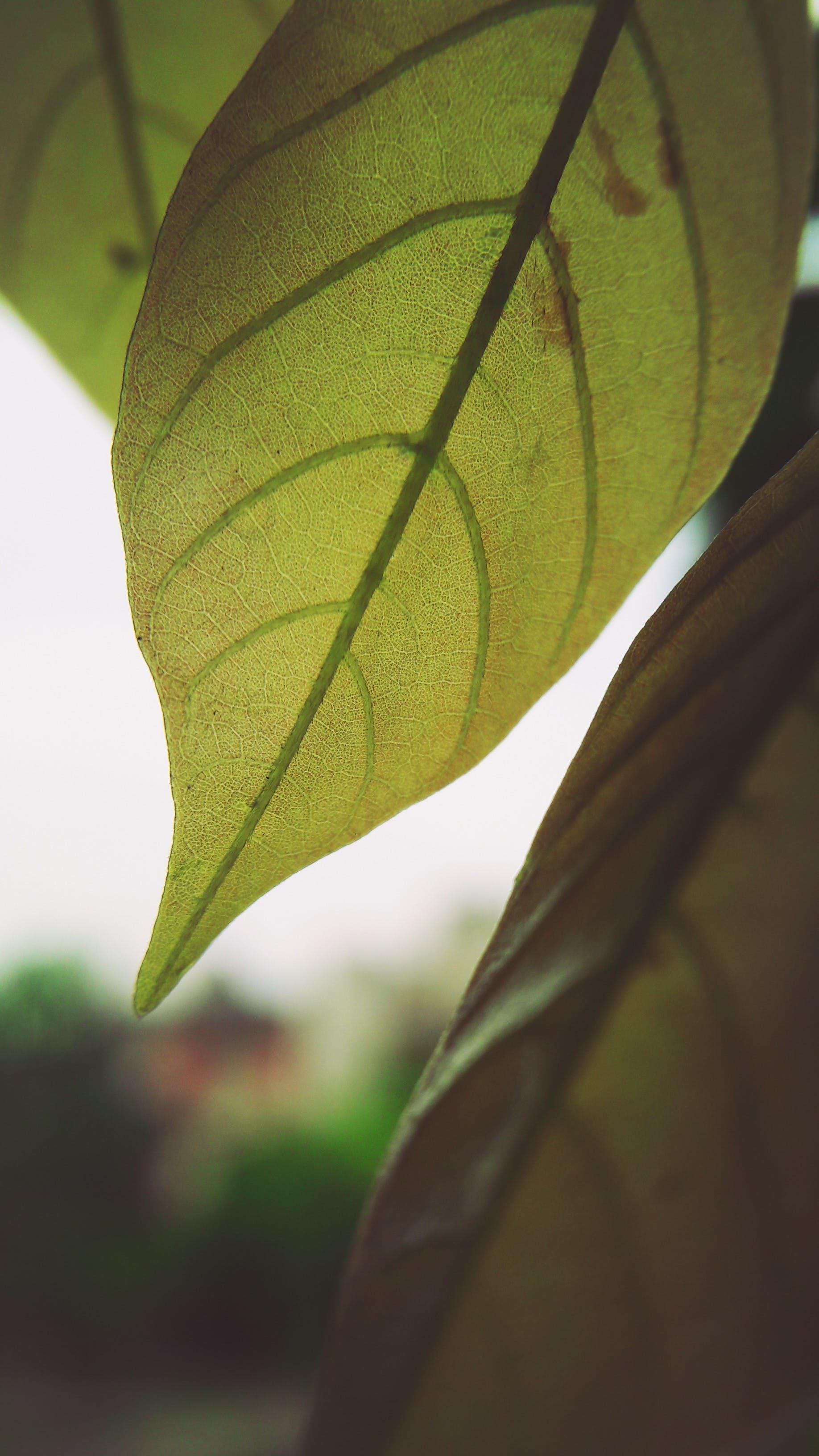 Kostenloses Stock Foto zu grünes blatt