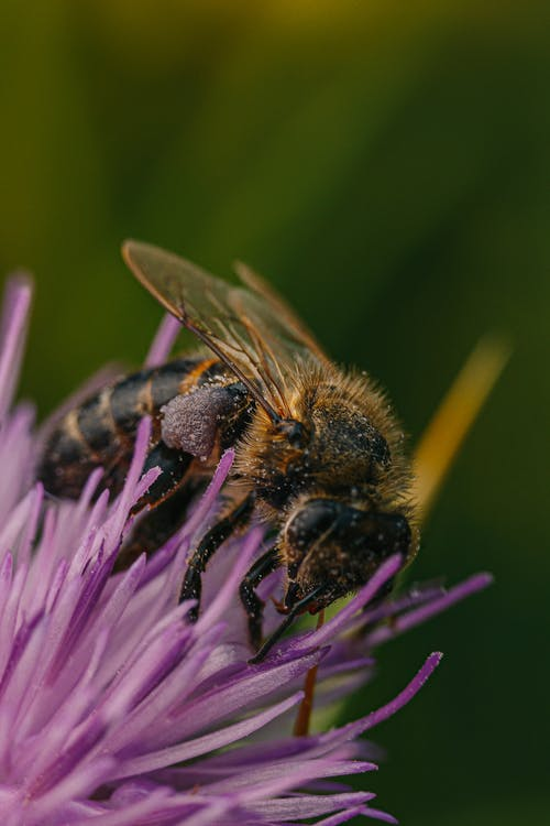 abeille, ailes, bourdon