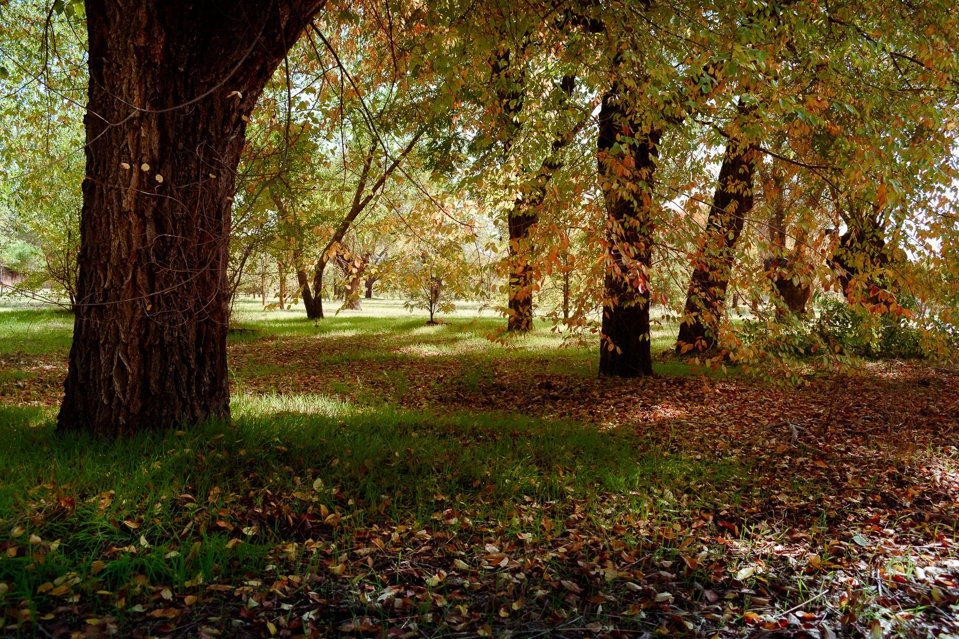 Free stock photo of autumn, autumn colours, autumn leaf, autumn mood forest