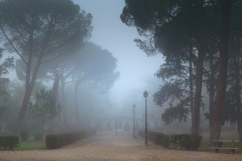 Free stock photo of city park, foggy, misty, pines