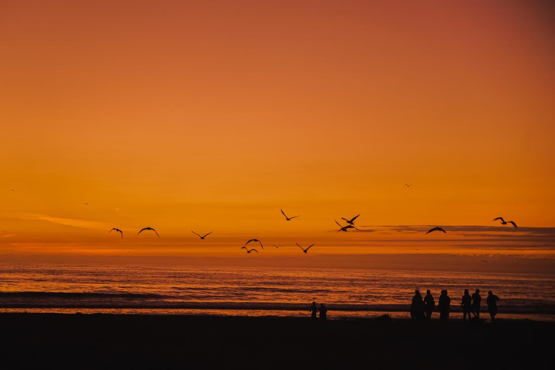 Silhouette Photography Of Flying Birds