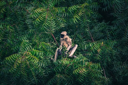 Imagine de stoc gratuită din animal, arbore, blană, creangă