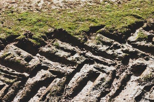 Gratis arkivbilde med arie van ravenswaay, dekk, gjørme, gress