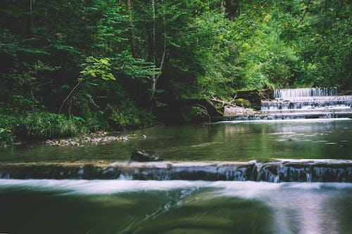 Gratis stockfoto met bomen, Bos, bossen, cascade